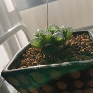 ありのままの植物の姿に癒される