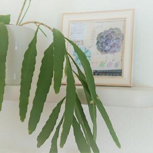 暮らしのそばに置きたい植物、室内のどこに置きますか?