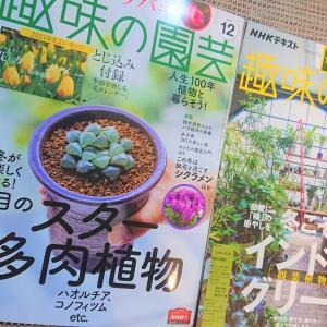 やる気になる『NHK趣味の園芸』雑誌で多肉植物を知っておもしろい♪
