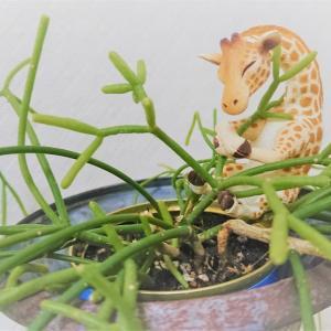 部屋に置いた植物からコバエが発生したので対処した~土を間違えるな危険!