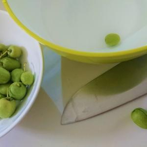 今日はオリーブの収穫日♪少しの収穫で作ったオリーブの塩漬け☆前半