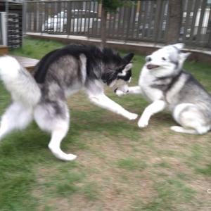 よく遊ぶ姉弟