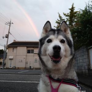 虹とワンプロと中秋の名月はいづこ