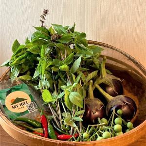 新鮮タイ野菜でグリーンカレー by MT HILL FARM