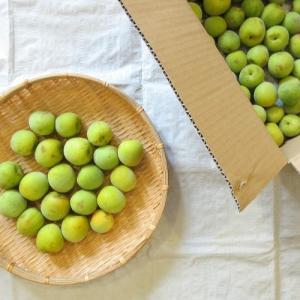 『季節の手仕事』梅仕事第一弾、オーガニック無農薬の南高梅で激ウマ日本酒梅酒を作る。