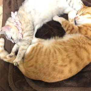 猫用ダブルベットで寝るうちの🐈❤️