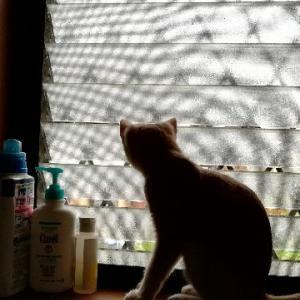 保護猫を迎え入れた話④ 正式譲渡への迷い