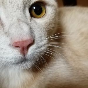 保護猫を迎え入れた話⑤ 猫飼いになる決意
