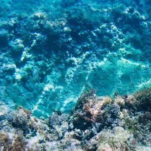 昨日の海♪ 水中撮影など