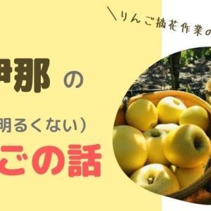 【上伊那の明るくないりんごの話】収穫しながら農家さんに聞きました