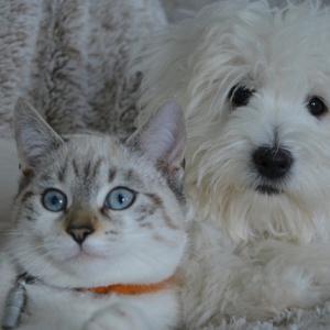 子なし夫婦がペット(犬や猫)を飼うと「子供の代わり」で「かわいそう」?