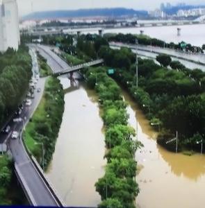 立派な脚のチゴハヤブサ〜ソウルの水害の記録も
