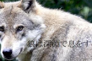 BLお題小話「狼は深淵で息をする」