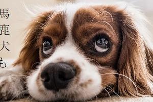 BLショートショート「馬鹿犬も食わない恋」