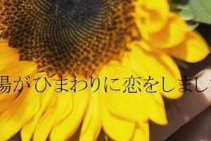 BL小話「太陽がひまわりに恋をしました」表紙