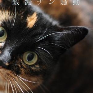 BLショートショート「銭湯チン騒動」表紙