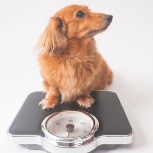 【健康管理】自分の体も見える化 体重を「計るだけダイエット」って何?