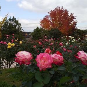 福山 緑町公園  広島県