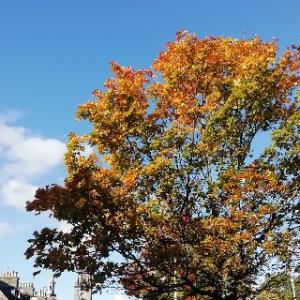 気がつけばすっかり秋というか冬支度