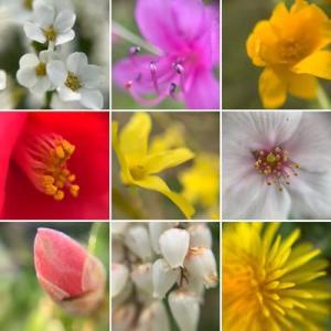 今日の散歩はマクロレンズでお花を!