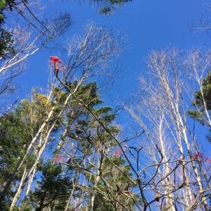 北八ヶ岳の野鳥と滝と紅葉(バランスディスク始めました)