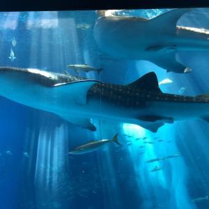 美ら海水族館は沖縄の人気観光スポット