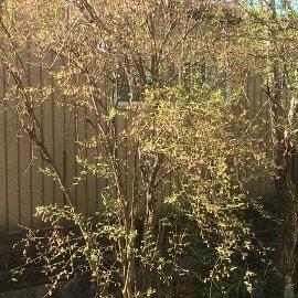 朝から春を実感!~自然庭園~