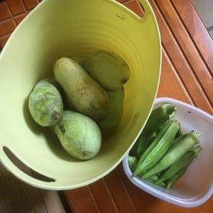 オクラと最後のポポーを穫って直ぐ帰ってきた!~自然農園~