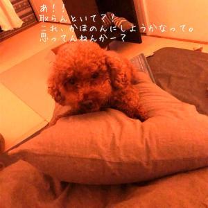 それは枕。ニンゲン用の枕。