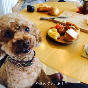 パン食べよう!