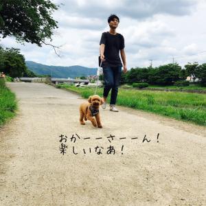 加茂川散歩。