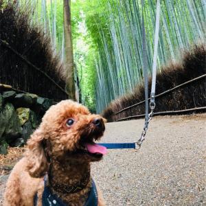 嵐山の竹林。