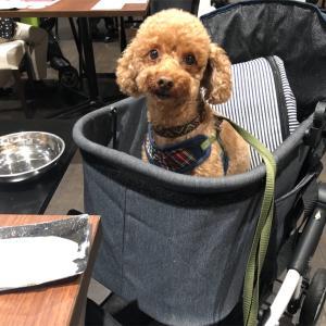 狗賓。夕ご飯編。