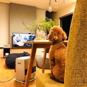 1番あったかい場所でテレビ見る…イヌ?