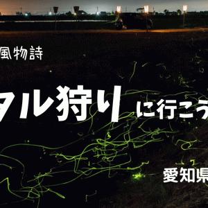 ホタル狩りに行ってきました 愛知県小牧市「ホタルの里」