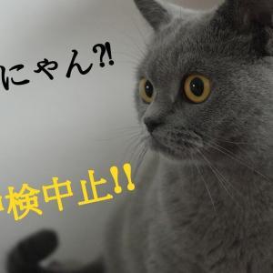 【台湾ニュース】中国語検定、6月も台北会場は中止!