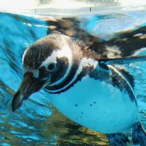 桃園旅行2日目|八景島がオープンした水族館「X-PARK」、実際どう?