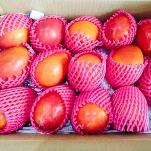 2021年夏、箱買いしまくっている台湾フルーツ