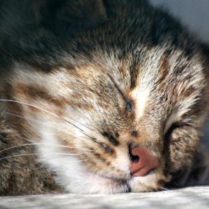 睡眠時無呼吸症候群の原因はストレス?チェックする方法と対策グッズは?