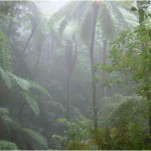 奄美大島が世界自然遺産に2021登録決定!その理由は絶滅危惧種を守るため⁈