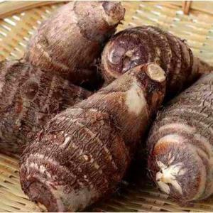 京野菜の種類と特徴は?生産者のこだわりが伝統野菜の継承と新京野菜の開発を!