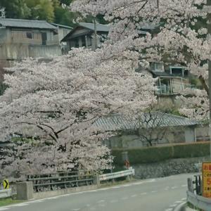 桜並木ドライブと買った靴
