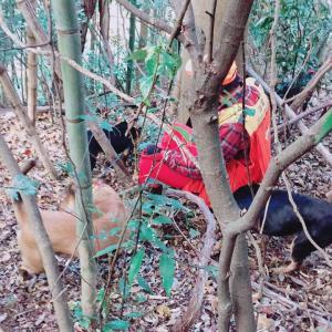 猟犬 猪猟に特化した猪犬との猟