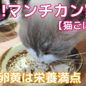 本日の猫ごはん