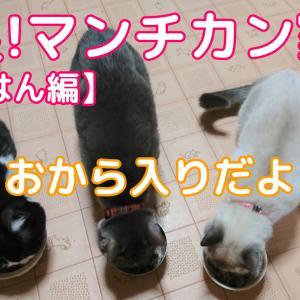 本日の猫ごはんは「おからパウダー」入り!