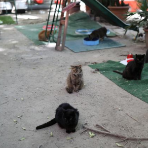 2020.10.29 ・経済指標カレンダー  ・一時960ドル超下、ダウ工業株30種平均は大幅に4日続落し ・猫の避難所は猫のCOVID孤児を受け入れます
