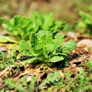 芝生は食えない【雑草まみれの庭】畑にして種を蒔く「家庭菜園は究極の暇つぶし」