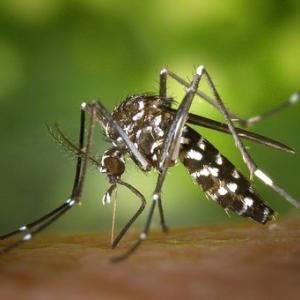 コロナ蚊が心配【玄関から入るのを防ぐ】【野外で蚊から身を守る】虫除け最強おすすめグッズ18選
