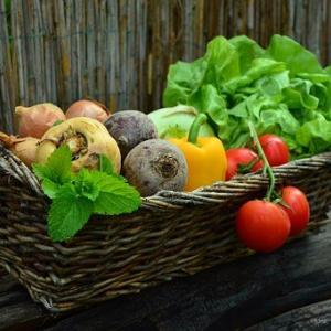 「野菜の値段高過ぎ!」プチ自給自足【初心者が始める家庭菜園】5日で芽が出た!はつか大根・スティックセニョール・モロヘイヤ