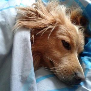 コロナ不眠「寝たいのに眠れない」早くグッスリ眠りたい時の対処法